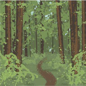 Illustration of a redwood forest
