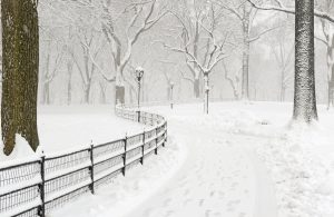 Central Park in a blizzard
